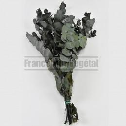 Tableau végétal stabilisé PicaGreen 40x40cm