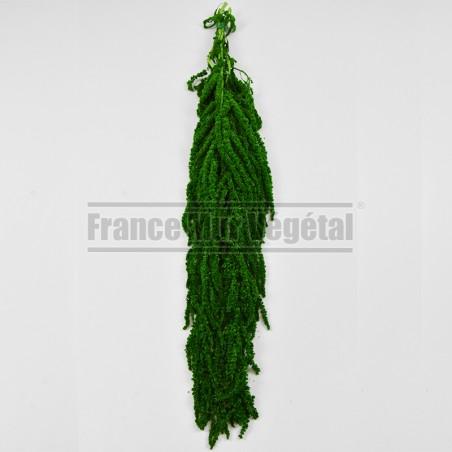 Tableau végétal stabilisé Lichen Vert Nature 40x40cm
