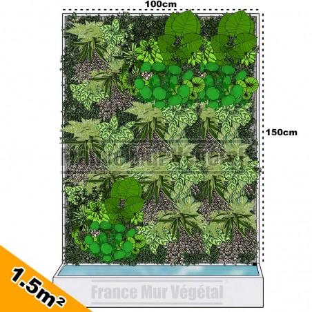 Fittonia Vert en pot Ø6cm