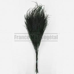 Asparagus Officinalis...