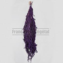 Amaranthe stabilisée Violet