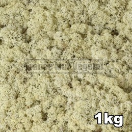 Lichen Scandinave stabilisé Naturel 1kg