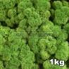 Lichen Scandinave stabilisé Vert Forêt 1kg