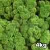 Lichen Scandinave stabilisé Vert Forêt 4kg