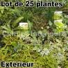 Lot de 25 plantes pour mur végétal extérieur
