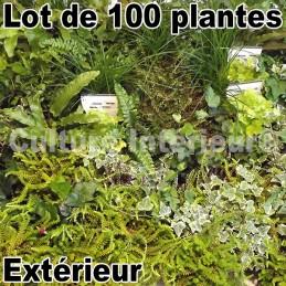 Lot de 100 plantes pour mur...