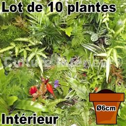 Lot de 10 plantes pot Ø6cm...