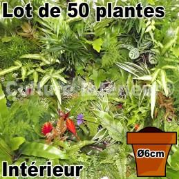 Lot de 50 plantes pot Ø6cm...