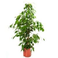 Plantes vertes d'intérieur - MonJardinVertical.fr