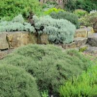 Plantes de rocailles pour mur végétal - MonJardinVertical.fr
