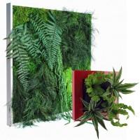 Cadres et tableaux végétaux