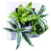Cadre végétal naturel