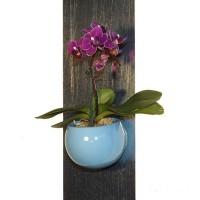 Pots magnétiques pour plantes - MonJardinVertical.fr