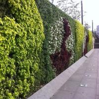 Wall of Plants modules pour mur végétal - MonJardinVertical.fr