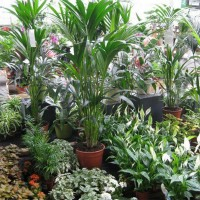 Plantes et végétaux