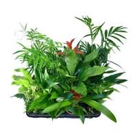 Plantes mur végétal intérieur & extérieur - MonJardinVertical.fr