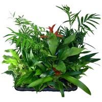 Plantes naturelles - MonJardinVertical.fr