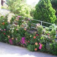 Plantes naturelles d'extérieur