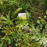 Plantes pour mur végétal extérieur - MonJardinVertical.fr