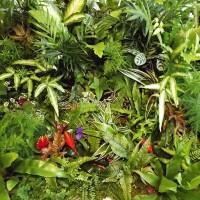 Plantes pour mur végétal intérieur - MonJardinVertical.fr