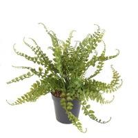 Plantes vertes artificielles