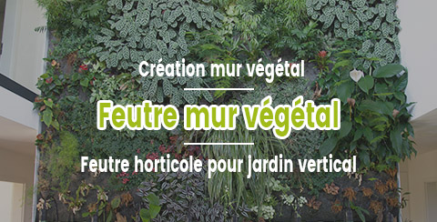 Feutre horticole Aquanappe pour mur végétal