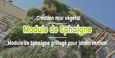 Module de sphaigne pour mur végétal
